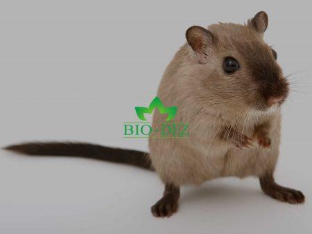 Kako se efikasno rešiti miševa i pacova?