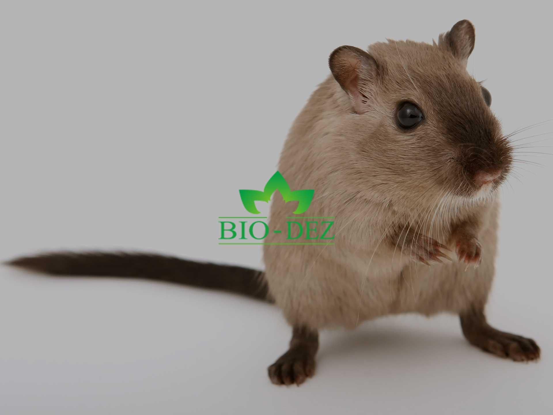 Kako se efikasno rešiti miševa i pacova