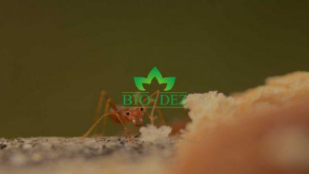 Kako se rešiti bubašvaba, bubarusa i mrava?