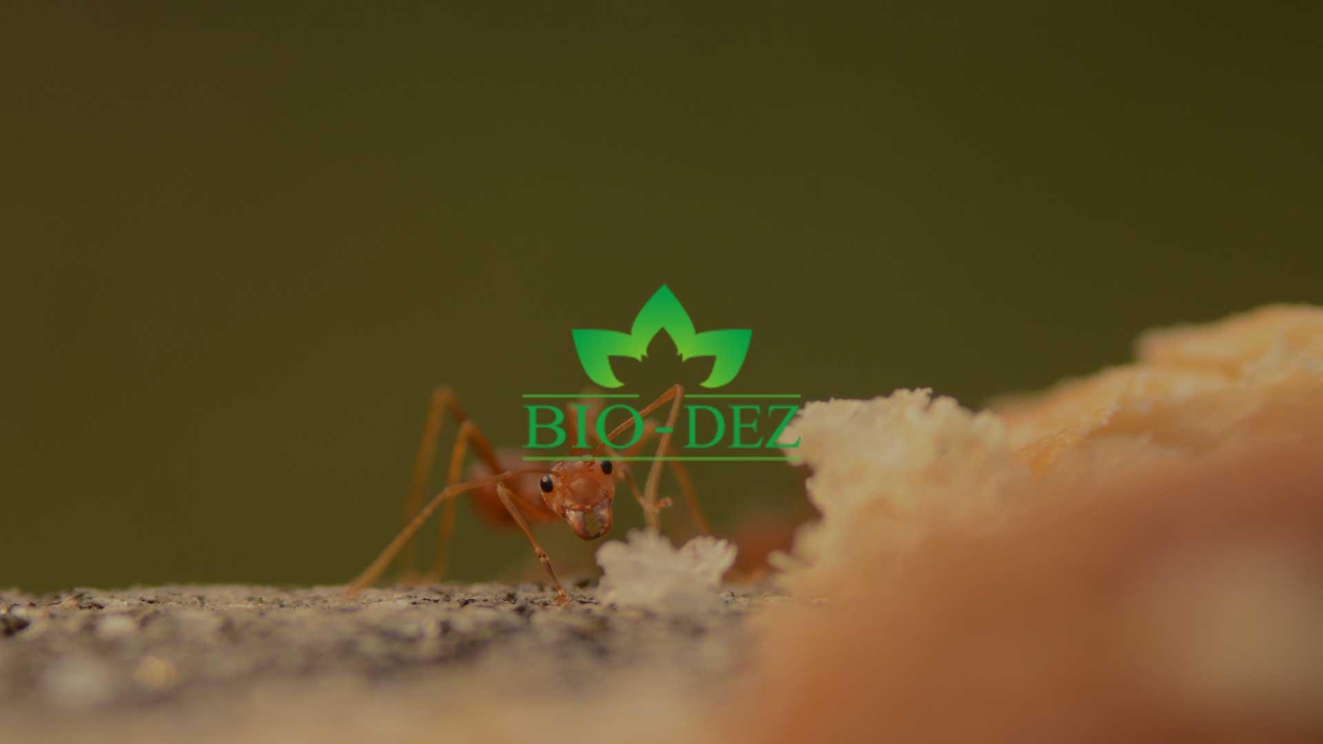 Kako se rešiti bubašvaba, bubarusa i mrava