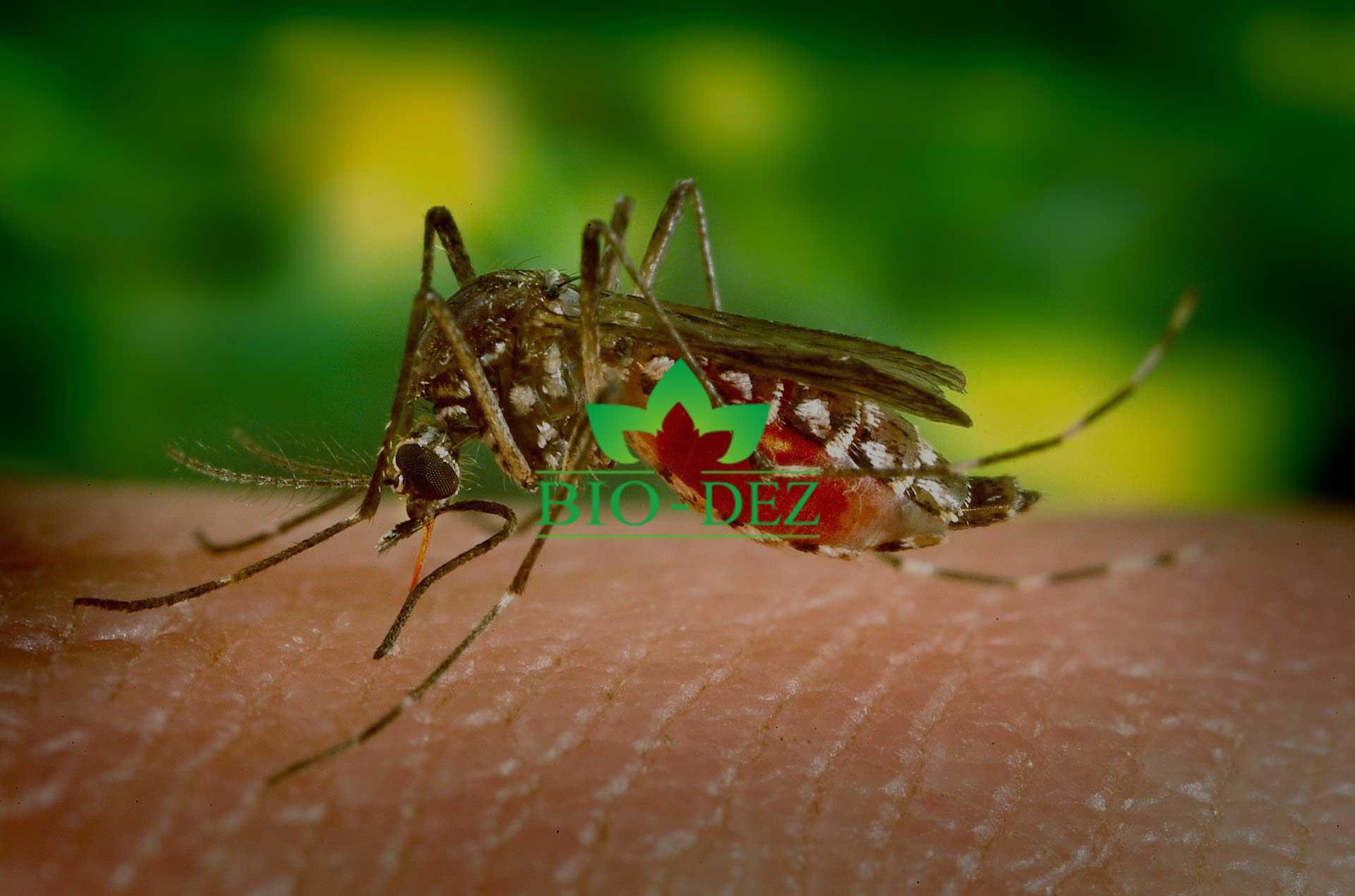 dezinsekcija komaraca - suzbijanje komaraca sa zemlje