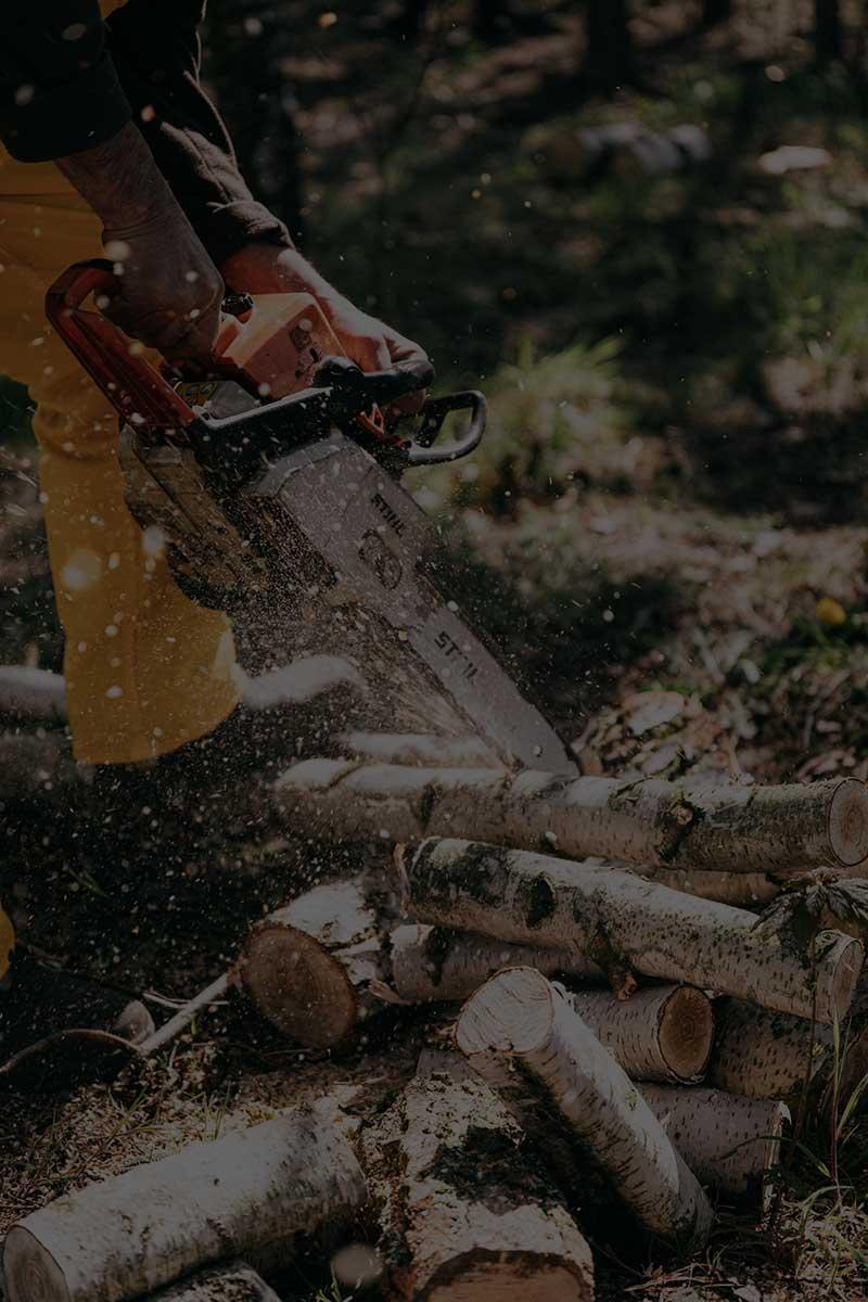 profesionalo obaranje stabala