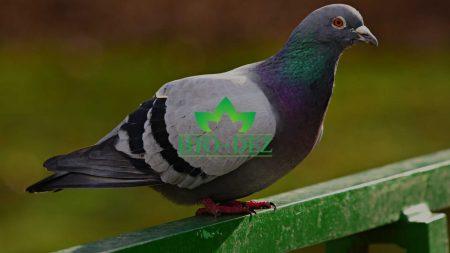 Zaštita od goluova i ptica