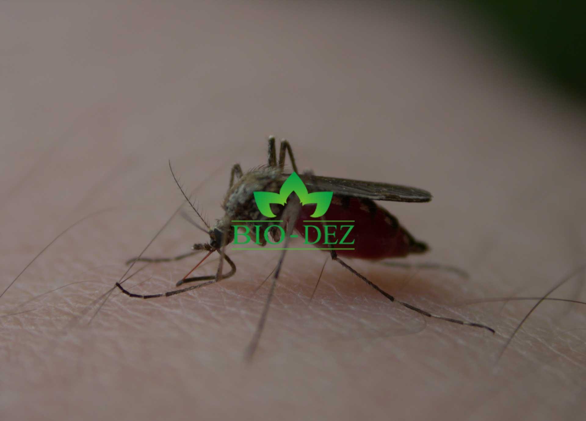 Zaprašivanje komaraca sa zemlje