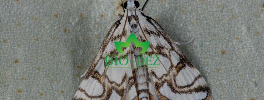 Dezinsekcija moljaca