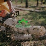 seca stabala i krosnji